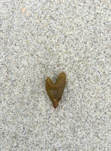 Heart sea weed